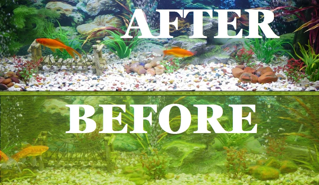 Complete aquarium clean fish tank clean out for How to keep fish tank clean without changing water