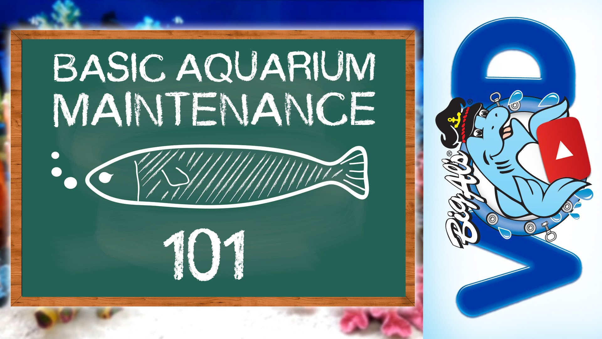 how to keep your freshwater fish tank clear